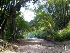 Bosques Paria (1)
