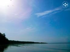 Golfo de Paria (10)